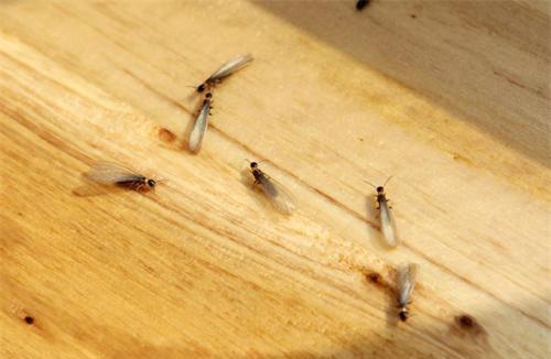 白蚁防治方案