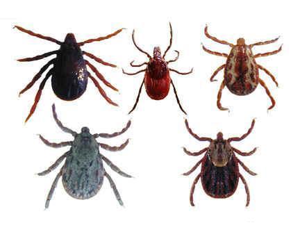 蜱类防治方案
