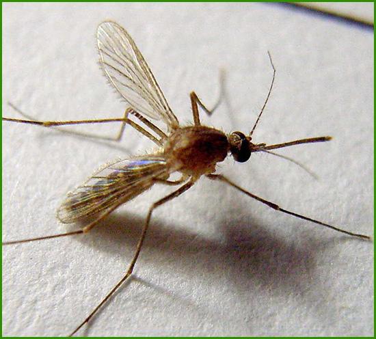 蚊子防治方案