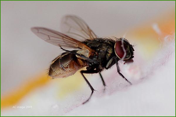 蝇类防治方案