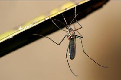 灭蚊对我们的身体健康有哪些意义