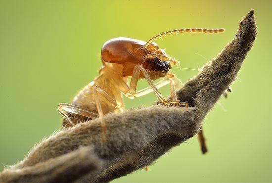 家中出现白蚁,切记不要私自做这4件事
