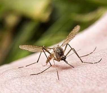 专业家庭虫害问题解决,营造健康的家庭环境