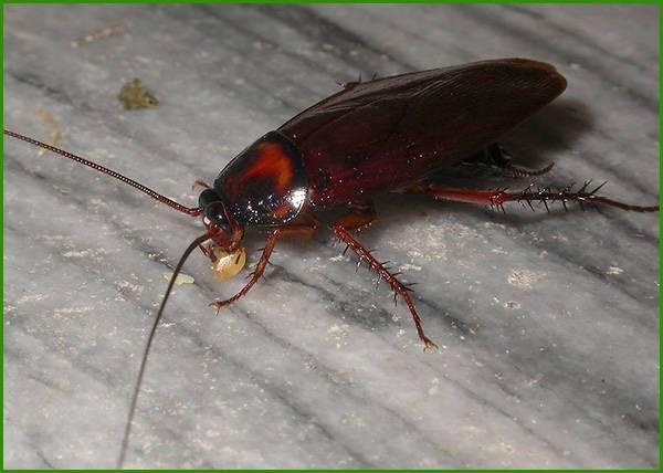 蟑螂防治方案