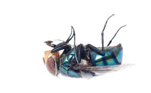 物理机械法防治蝇类危害