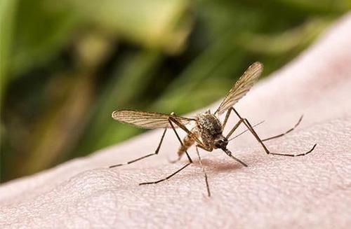 裕圆虫控提供蚊子防治服务